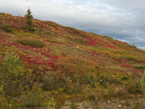 Herbstfarben -> Top Of The World (Kanada)